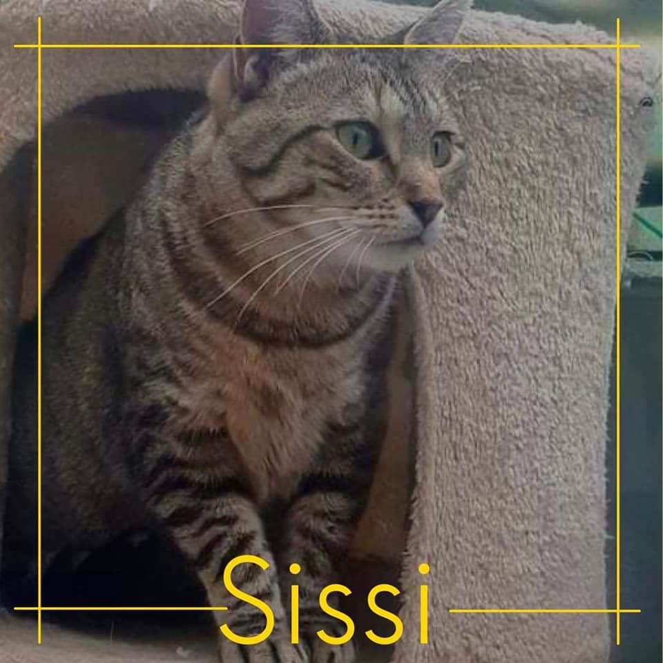 You are currently viewing Sissi